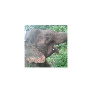 E.L.I.E (Elephant. Livelihood. Initiative. Environment)